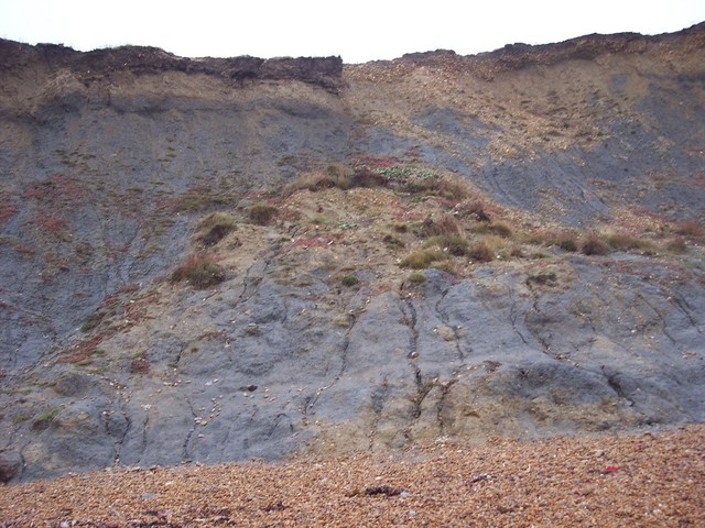 Further along the cliff an earlier rock fall has been compacted forming an under-cliff, The looser material has been eroded away by the sea and deposited further along the coast by the process of long shore drift