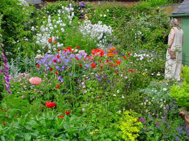 English cottage garden flowers images for Cottage garden plants