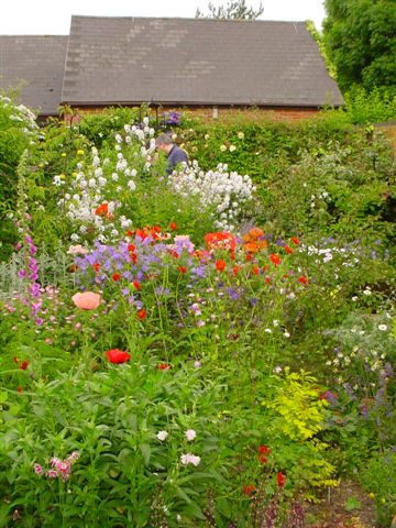 A typical display of Cottage Garden Flowers.