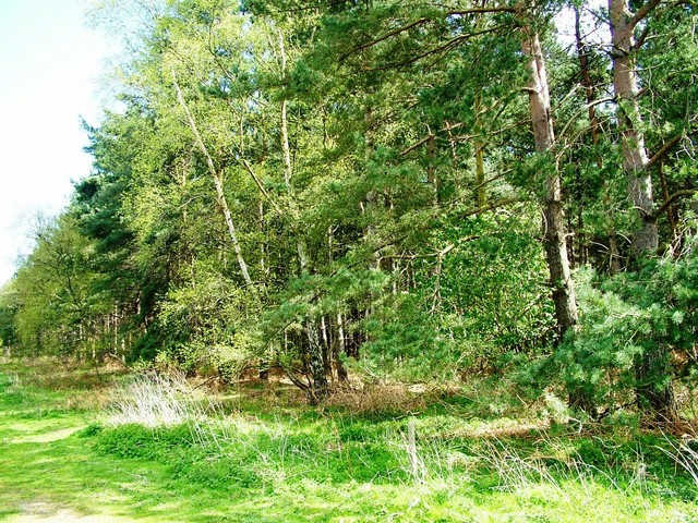 The forest around the former twin US bases of RAF Woodbridge and RAF Bentwaters where the strange craft and lights were seen