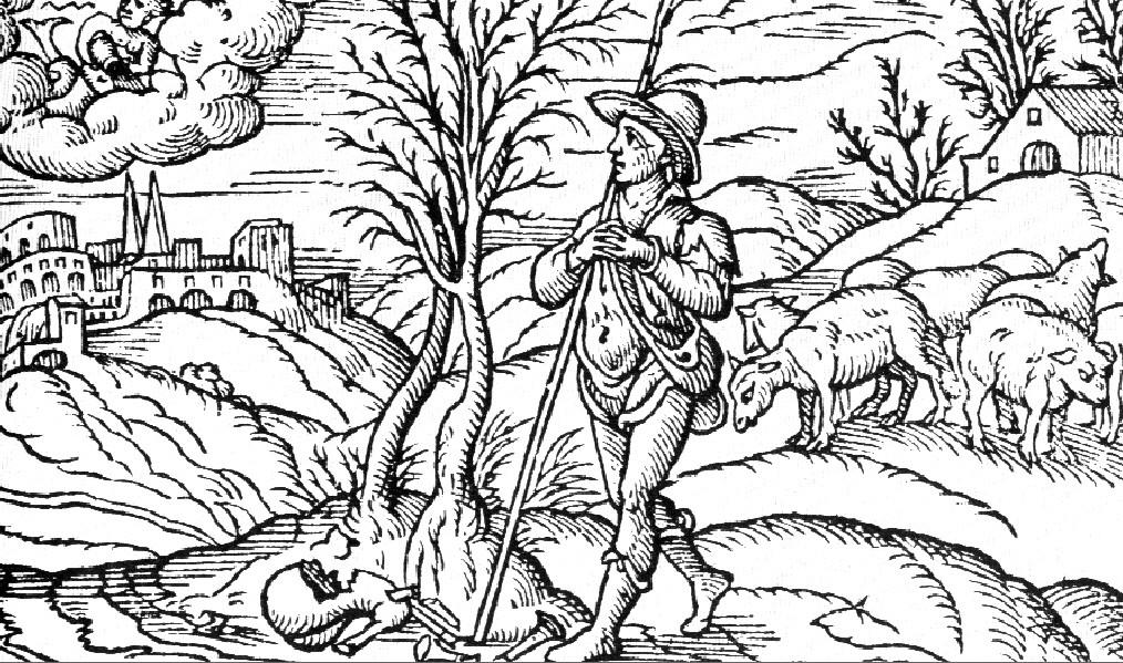 Elixaebthan shepherd
