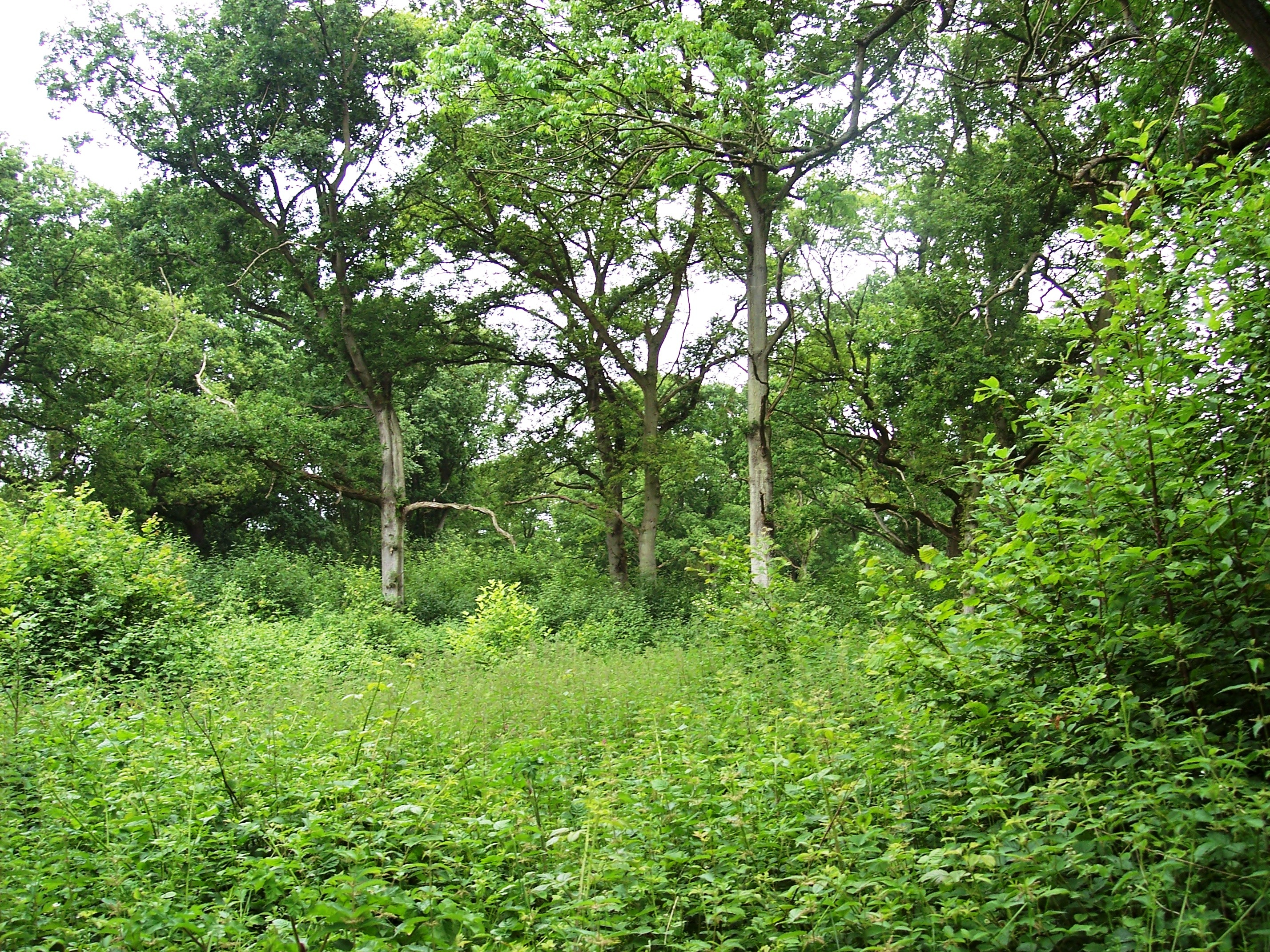 Wayland wood lies to the south-east of Watton, on the Merton estate, and consists chiefly of ancient oaks with a thick undergrowth of hazel. The Wood is thought to be the setting for the Babes in the Wood saga.