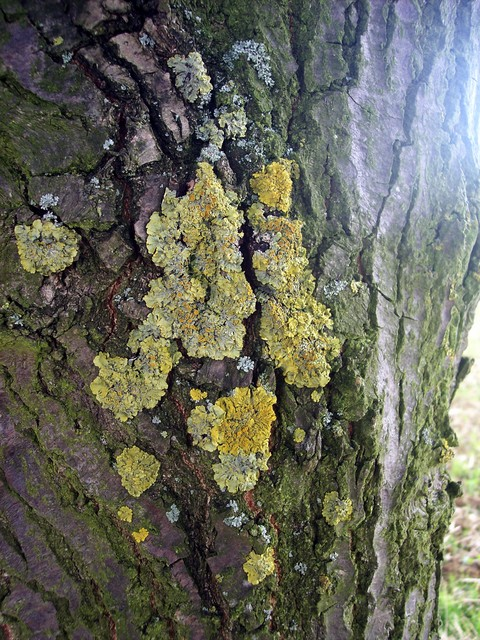 Common lichens - see pictures above for details.