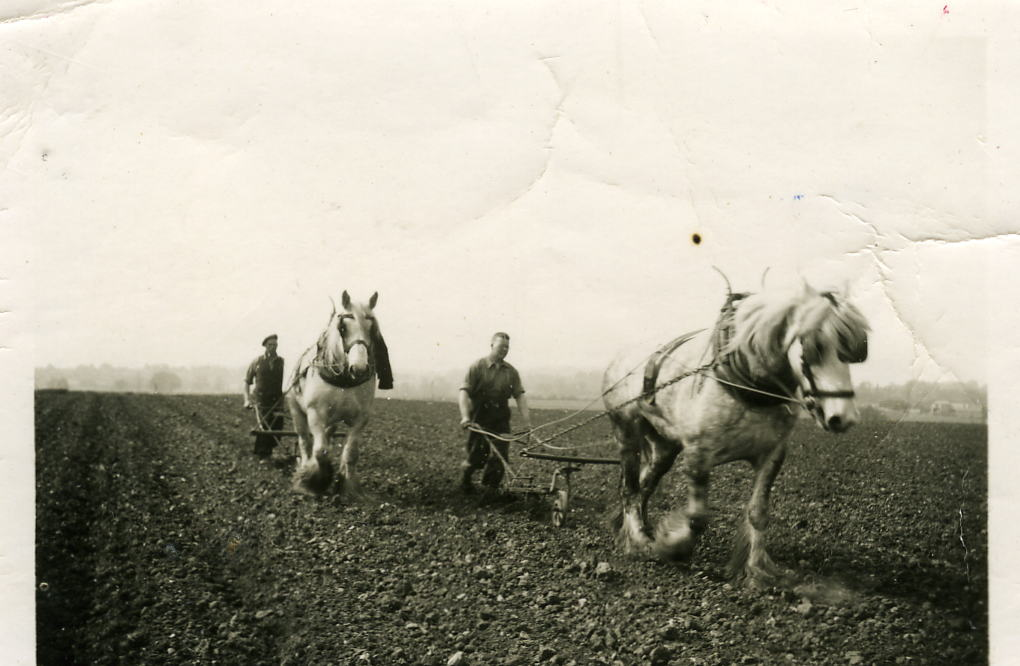 Horses were used to plough the land before tractor driven ploughs were invented