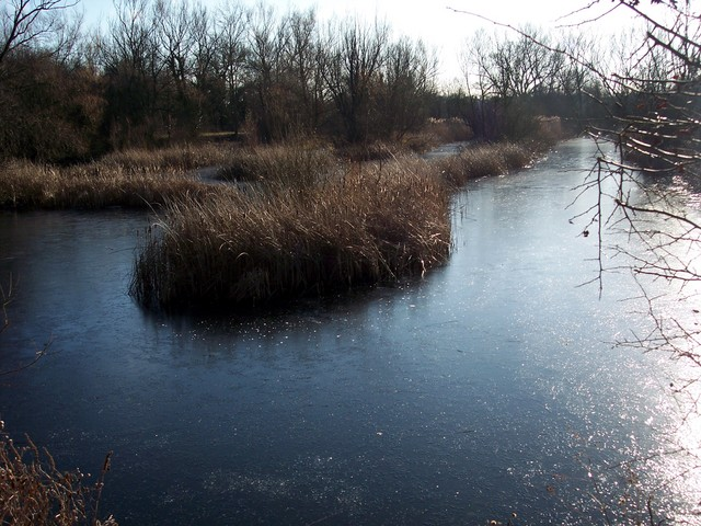 Picture taken January 29th 2006 at Felmersham Gravel Pits Nature Reserve.