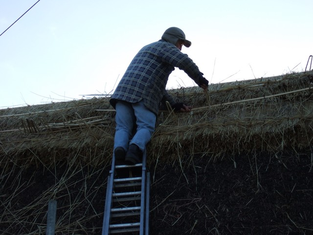 Thatching is the craft of covering a roof with Long Straw, Combed Wheat Red of Sedge.