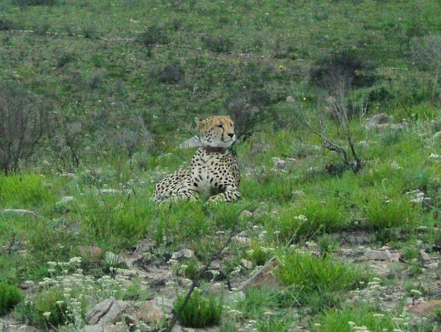 Pictured on safari in South Afriac January 2006.
