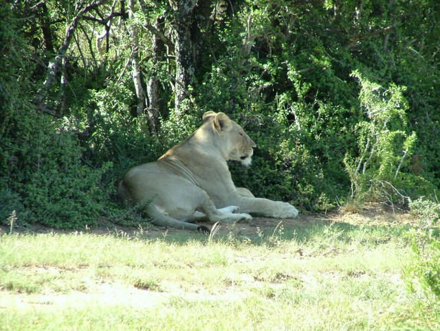 Pictured on safari in South Africa January 2006.