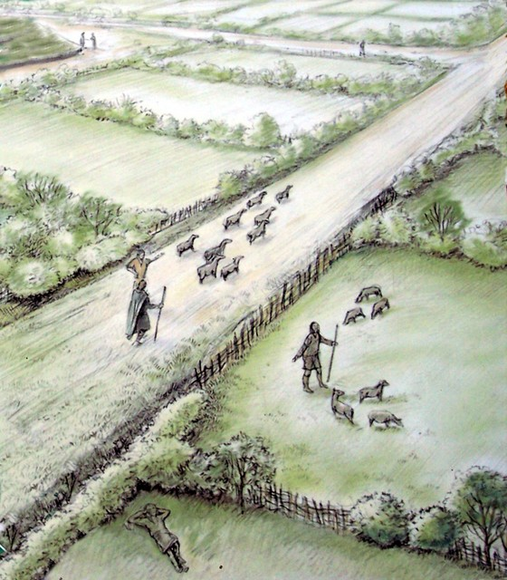 This is an artists illustration of a drove road. The road was banked and lined by hedges of Hawthorn, Blackthorn and Dog Rose. The road allowed sheep and cattle to be driven down to the water meadows without disturbing neighbouring livestock or people. The existence of sub-droves and paddocks sugges...
