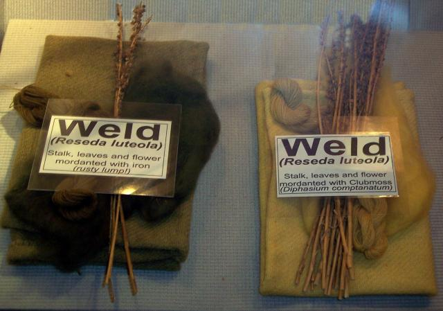 Some of the colours and dyes that were available in Anglo-Saxons times, made from weld.