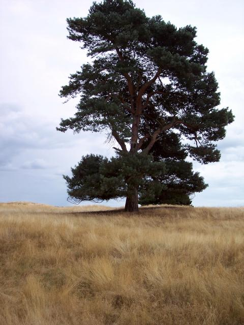 Picture taken at Sutton Hoo Suffolk August 10th 2006