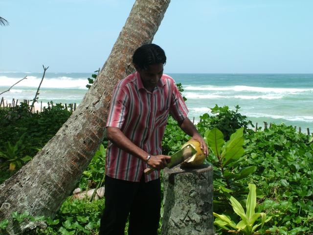 Anjana uses a cleaver to open a fresh coconut