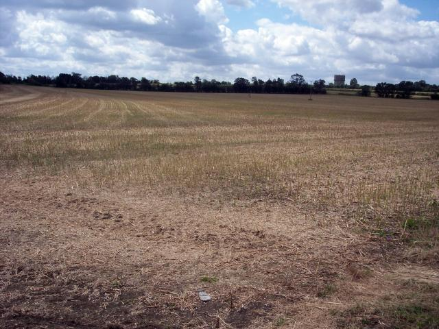 "Field After harvest. Oilseed rape is a ""break crop"" - one that helps improve the soil and yield of cereal crops planted afterwards, in particular wheat. It cannot be grown too regularly in the same field or the risk of disease builds up. Oilseed rape is always grown as part of a rotation a..."