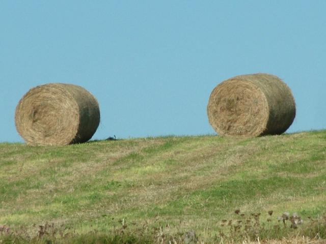 Rolls of hay in a field at The Lizard in Cornwall in early September 2007