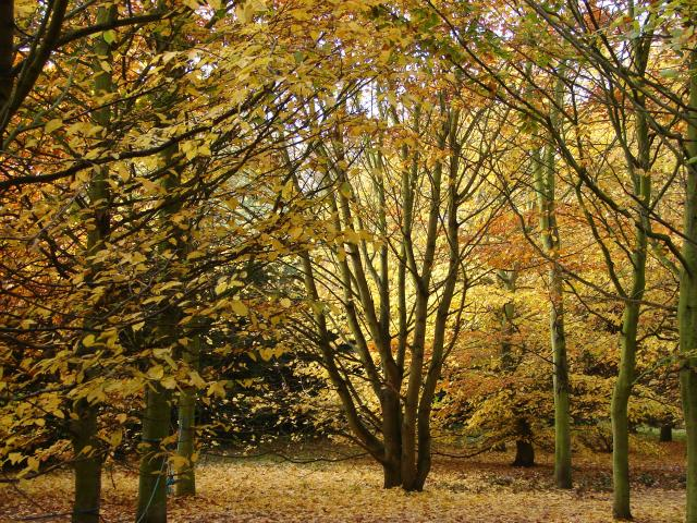 Autumn Colours from Anglesey Abbey, Cambridge