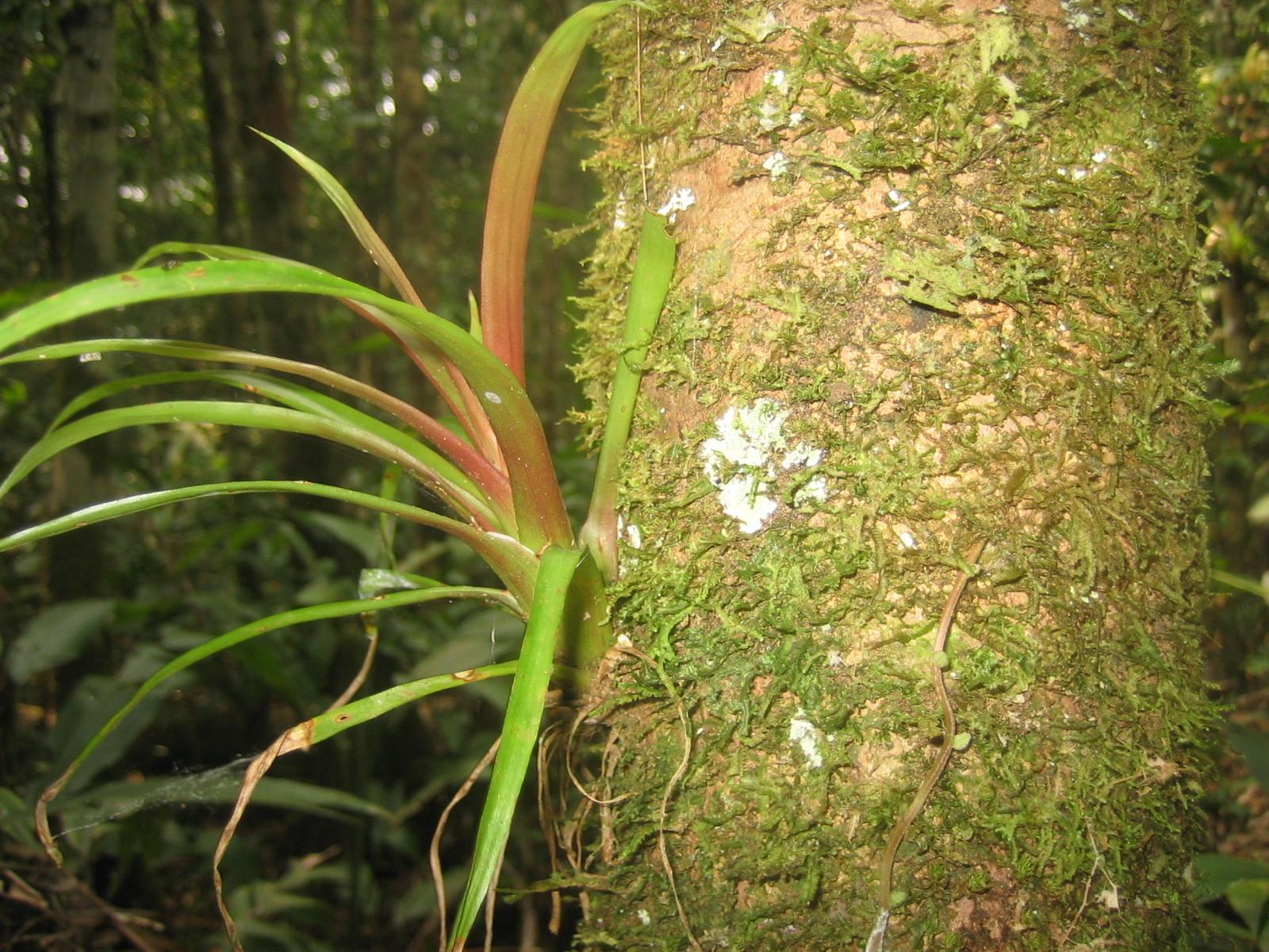 Home nen gallery for Plante jungle