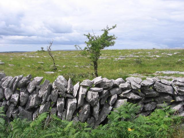 Limestone wall in the Burren on the west coast of Ireland