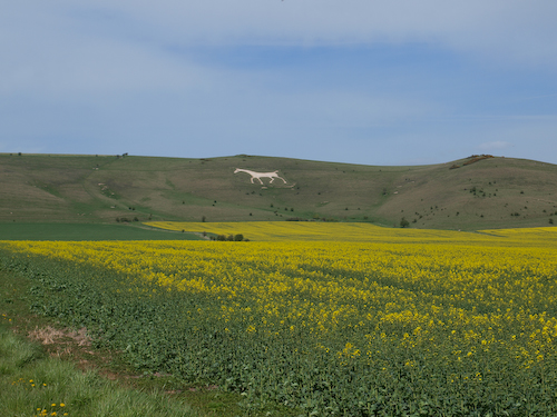 White horse hill carving in Wiltshire, located near to Avebury.