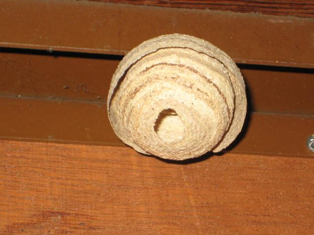 how to get rid of a wasp nest in winter