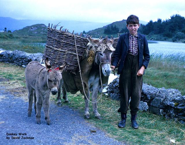 Donkey with panniers, Ireland