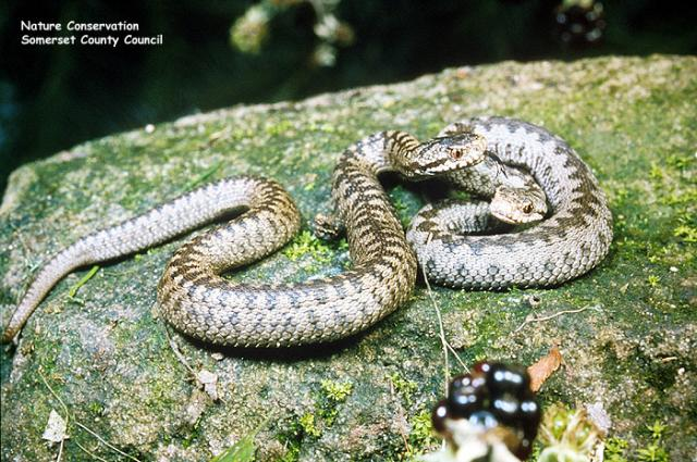 Two Adders