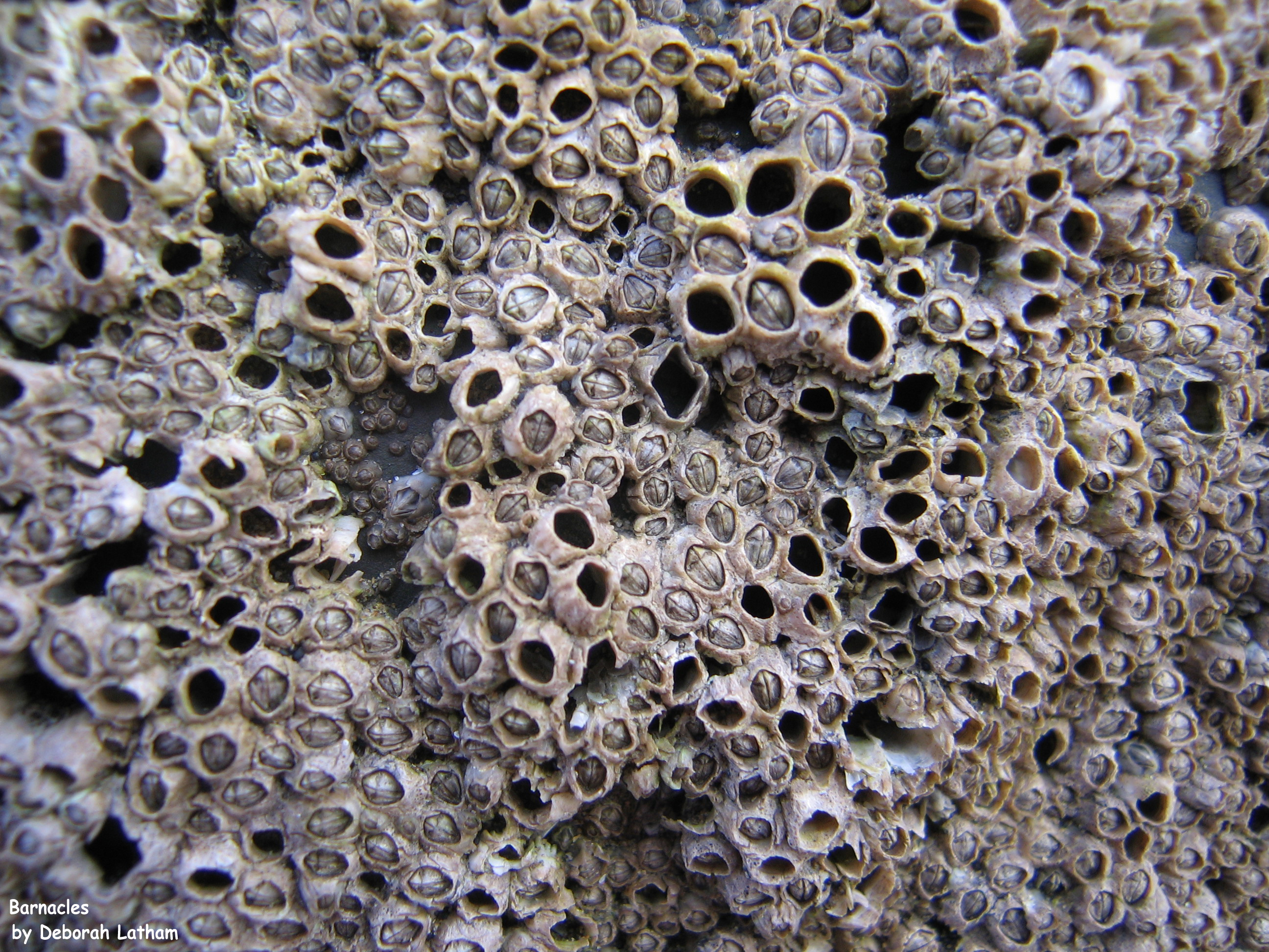 Full Article Assessment Of Trypophobia And An Analysis Of Its
