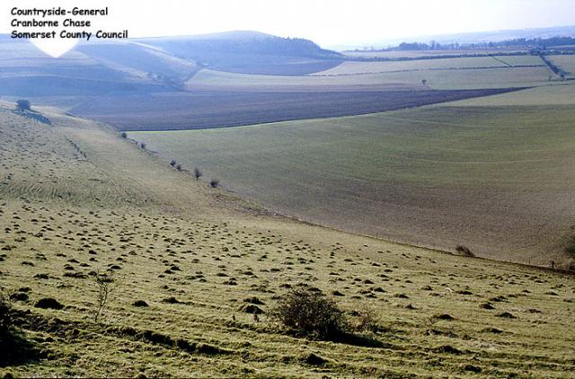 Fields and crops, Cranborne Chase, Wiltshire