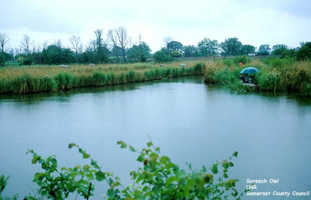 Fishing at Goss Moor.  Goss Moor is a 480 hectare National Nature Reserve in Cornwall, incorporating wetland, heathland and scrub enviroments.  It also includes the Screech Owl Sanctuary, which provides care and rehabilitation for injured and sick wild owls and displays of falconry with owls and bir...
