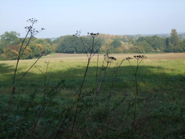 Looking across a field in early Autumn in the village of Tostock in Suffolk