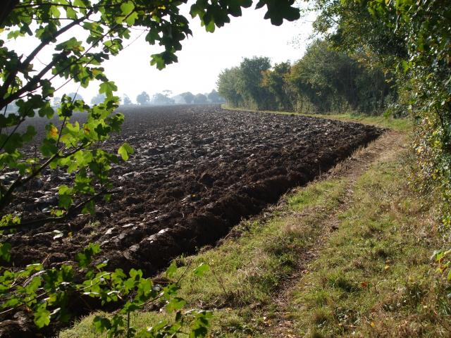 Looking across a ploughed field in early Autumn in the village of Tostock in Suffolk