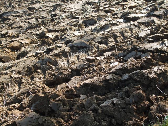 A ploughed field in early Autumn in the village of Tostock in Suffolk