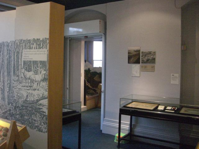 This is the start of 'The Story of Chelmsford' located downstairs. In this first section you will find out about Chelmsford during the Ice Age. You will see bones of a Hippopotamus, Woolly Rhinoceros and a Woolly Mammoth.