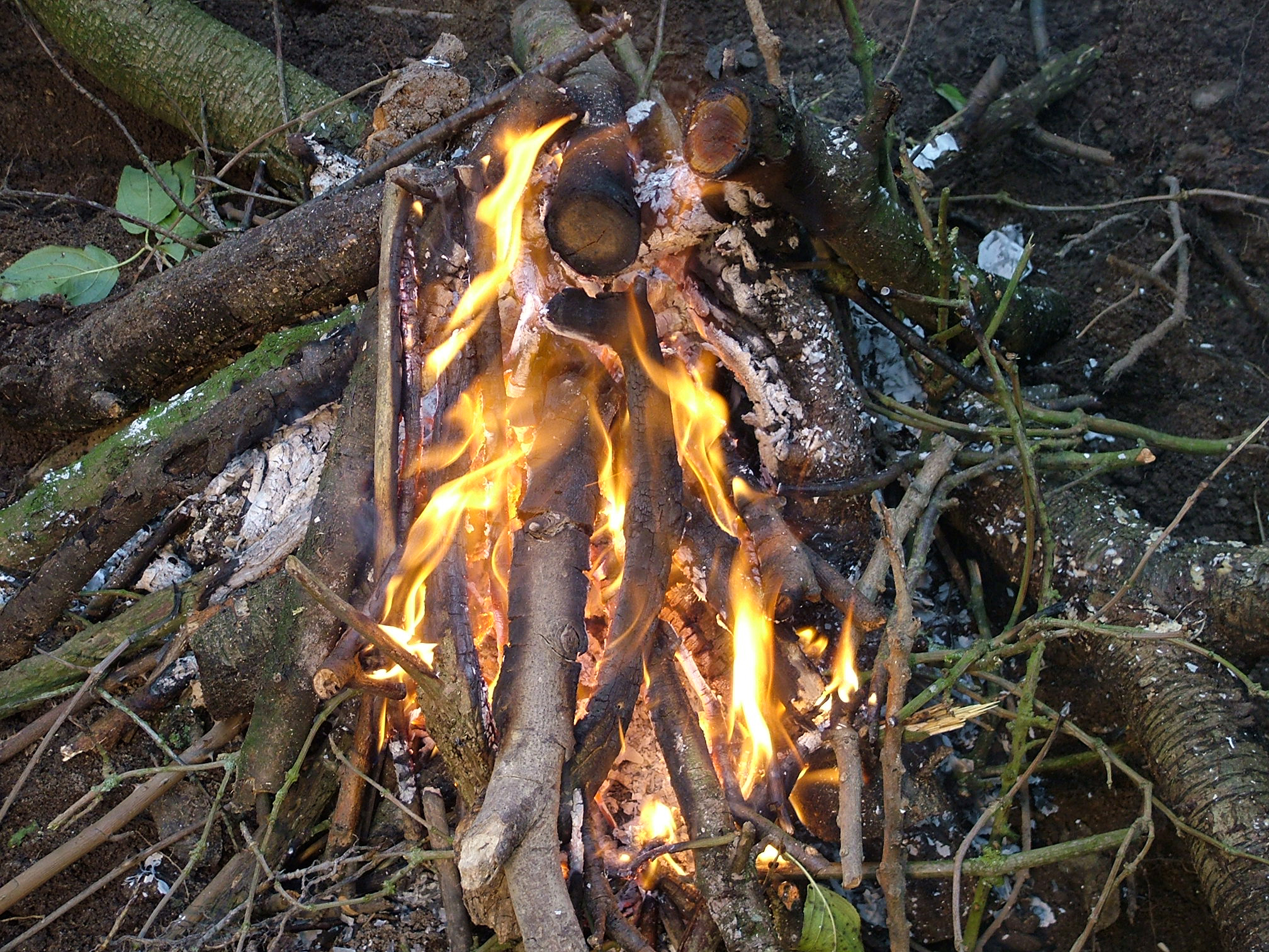 Once the fire is going, larger branches and twigs are added.