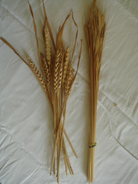 Materials used in the straw plaiting industry found in Tring in the 19th century.
