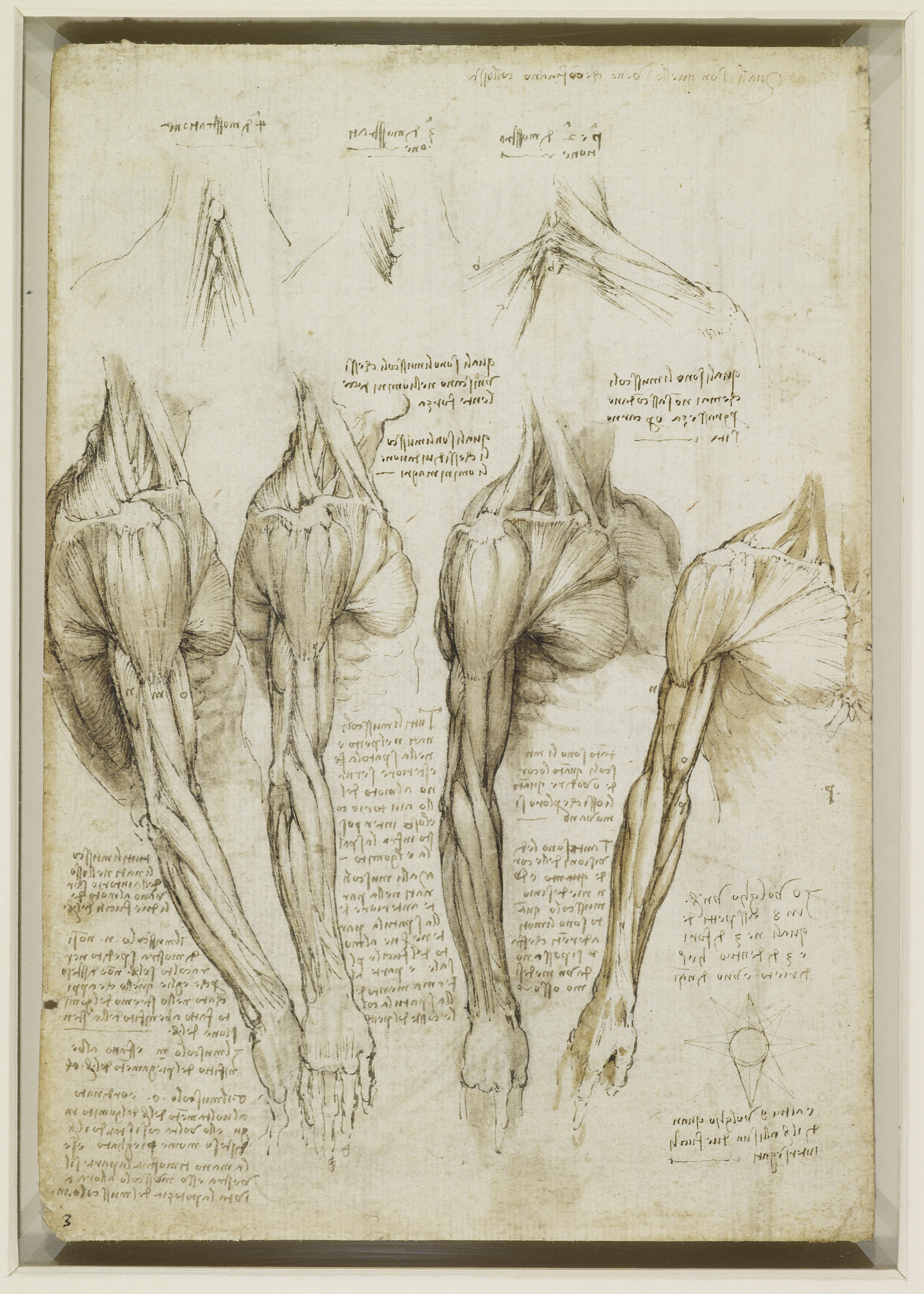 The Muscles Of The Shoulder Arm And Neck Nen Gallery
