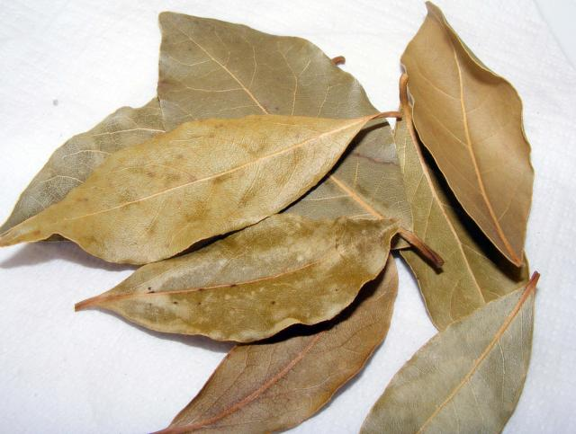 Bay leaves nen gallery - Cook bay leaves ...