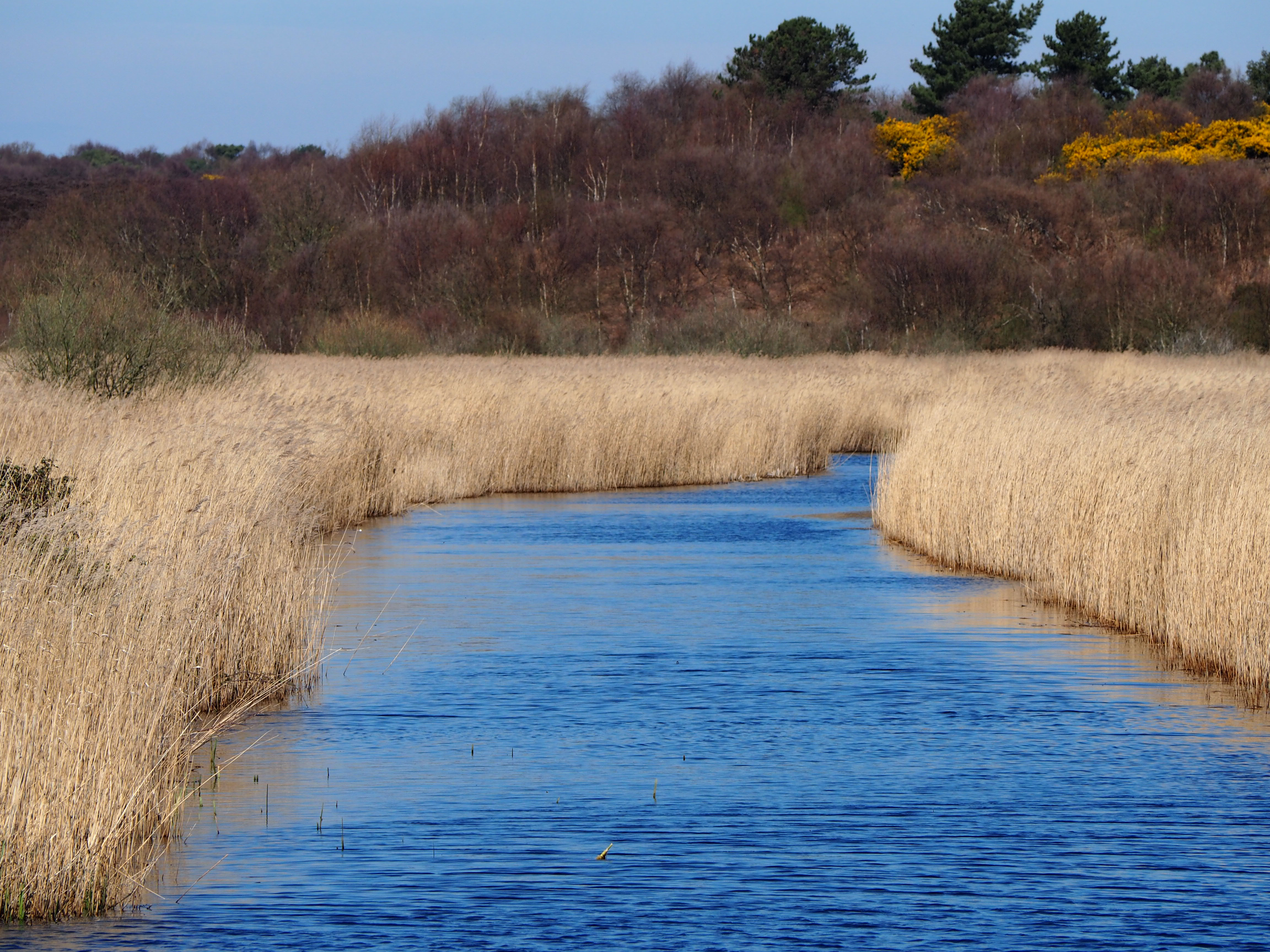 Wild and Wonderful: Nature Reserves ~ RSPB Minsmere