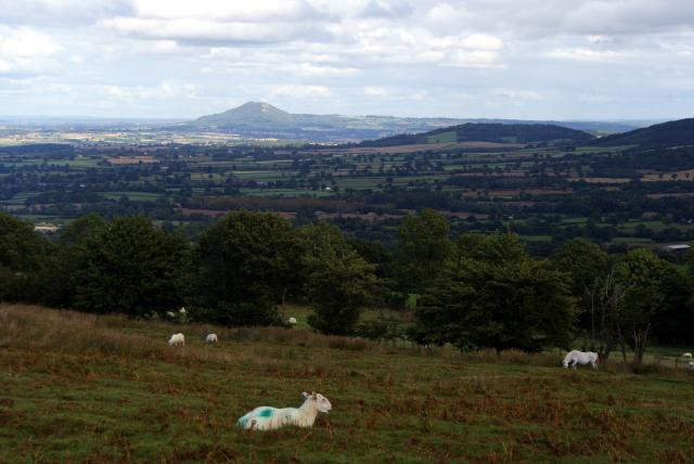 The Wrekin from The Long Mynd, near Church Stretton, Shropshire