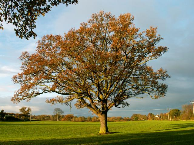 A set of images of the same oak tree photographed around the school year (2005-6) Image 16 (December 4th)