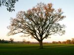 A set of images of the same oak tree photographed around the school year (2005-6) Image 17 (December 11th)