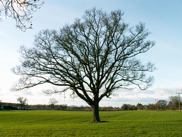 A set of images of the same oak tree photographed around the school year (2005-6) Image 18 (December 17th)