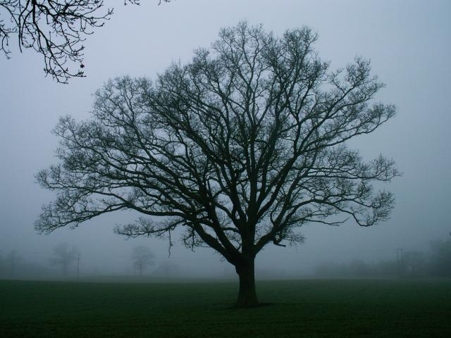A set of images of the same oak tree photographed around the school year (2005-6) Image 19 (December 25th)