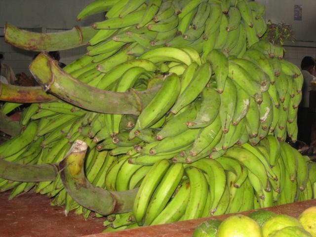 importing bananas regulations to canada
